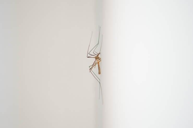 bathroom mosquito