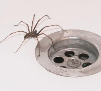 bathroom spider
