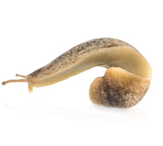 bathroom slug