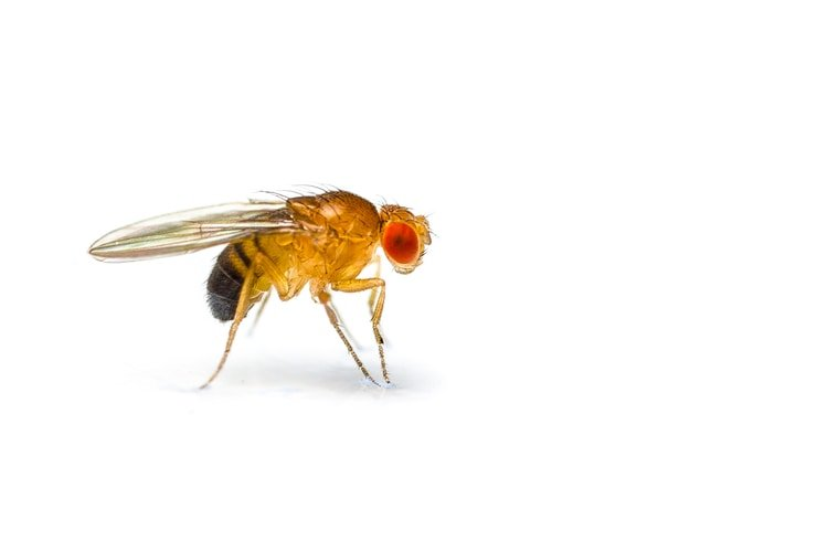 bathroom fruit fly