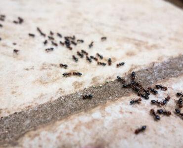 bathroom ants