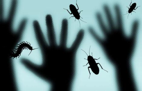 bathroom bugs